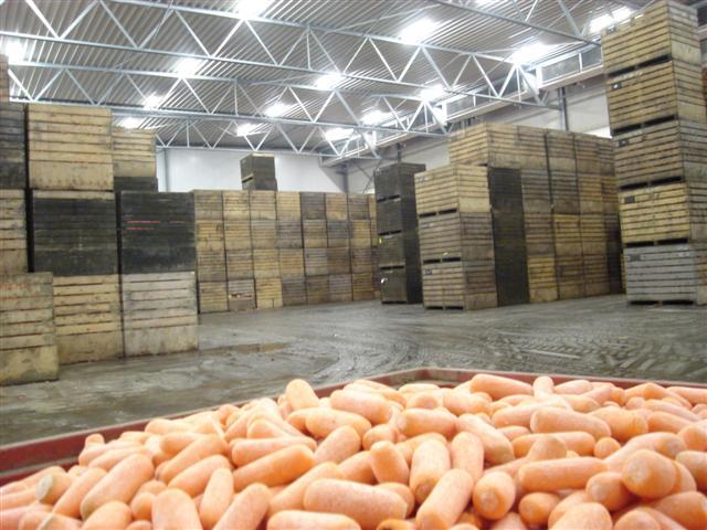 Крупный производитель овощей намерен удвоить складские мощности