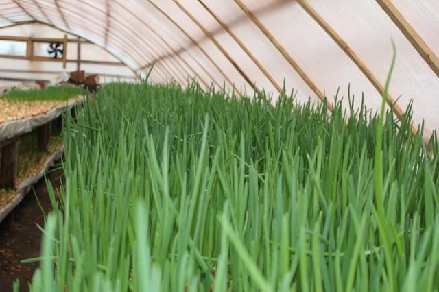 Мультитемпературный склад: хранение, упаковка, выращивание зелени